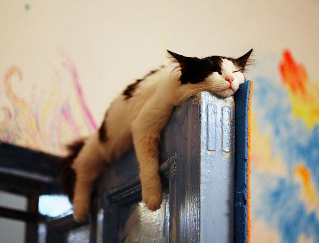 Cat chilling on the door & Cat chilling on the door - Funny pictures of animals Pezcame.Com