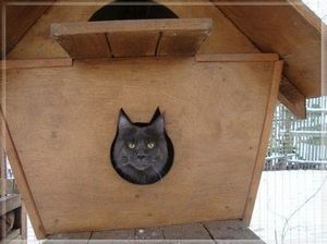 Cat in cat house