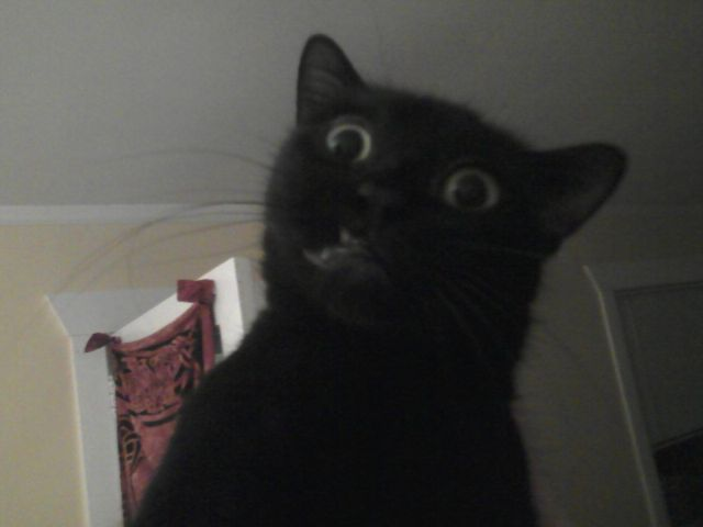 Pin funny cat faces on pinterest