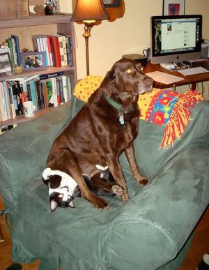 Dog sitting on a cat