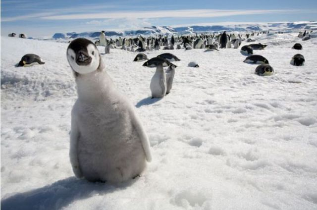 pengui-checking-out-photographer.jpg
