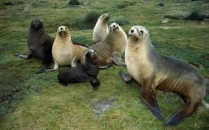 Seal family photo