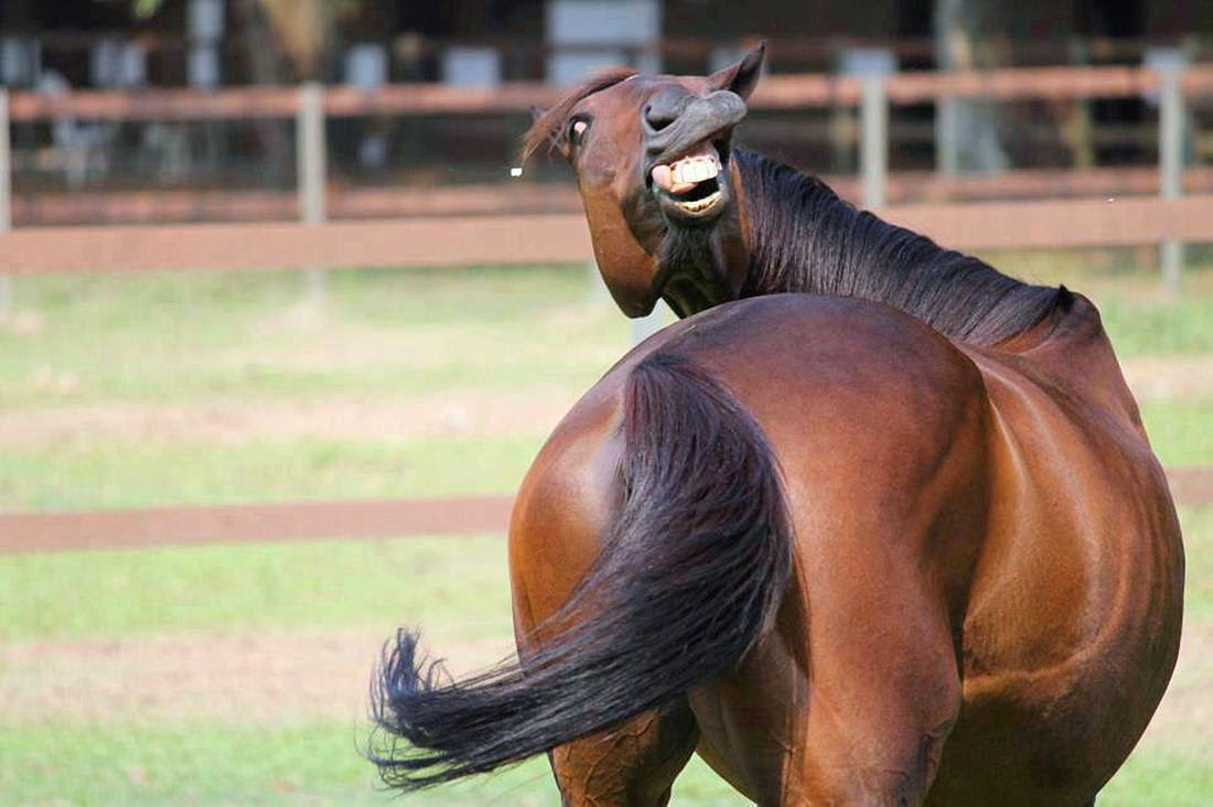 Horse Smiling Face Funny Pictures Of Animals