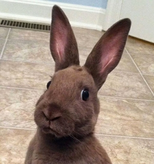 Bunny is not impressed
