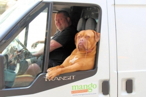 Dog chilling in a van