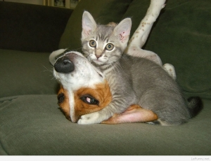 Kitten loves dog