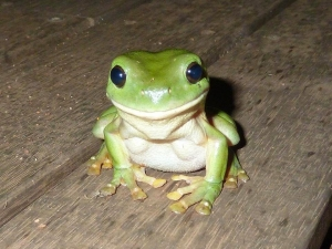 Smiling little frog